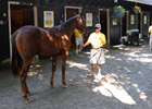 Business Down at F-T Preferred Yearling Sale