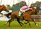 Hollywood Derby, Miesque End Turf Festival