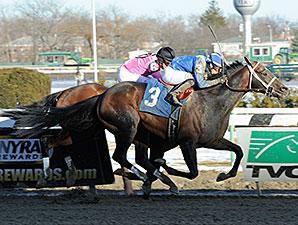 Farhaan wins the 2014 Stymie.