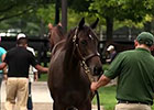 Fasig-Tipton Kentucky: The July Sale Preview