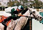 Grade I Winning Sire Fastness Dies at 23