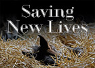 Longform Feature: Saving New Lives