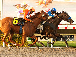Fed Biz wins the 2012 El Cajon.