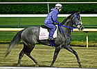 Fiftyshadesofgold Will Start in Eight Belles
