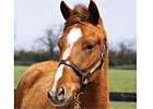 Filly Bred for Charity to be Sold April 30
