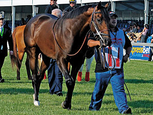 First Dude, 'Charly' in Final Belmont Works