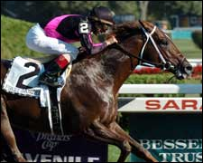 First Samurai to Start as Stallion for $40,000