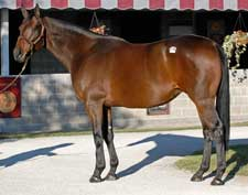 Fleet Indian to Sell at Keeneland November
