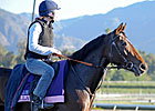Euros Arrive, Take to Track at Breeders&#39; Cup
