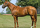 Flower Alley Sires First Foal