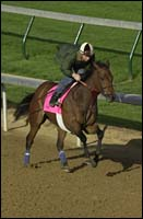 Flute Back In Oaks Picture After Infection Sidelines Scoop