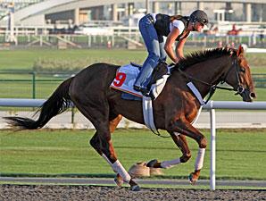 Fly Down Dubai 2011