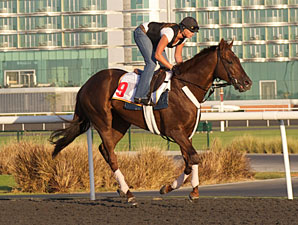 International Field Set for Dubai World Cup