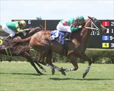Flying Circle Sweeps to Calder Distaff Turf Sprint Win