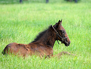 Live Foal Reports Down 13.5% from 2010