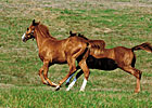 Foal Crop for 2013 Projected to Hold Steady