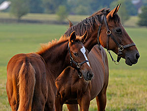 General Stud Book Shows Foal Numbers Decline