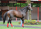 Bullet Move for Fort Larned in Whitney Prep