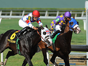 Fort Loudon wins the 2013 Gulfstream Park Sprint Championship.