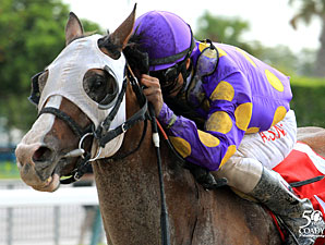 Fort Loudon wins the 2012 In Summation Stakes.