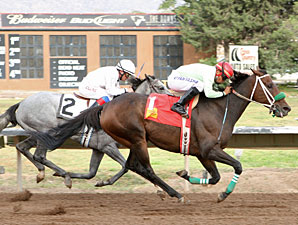 Fox in the House wins the 2012 Con Jackson Claiming Handicap.