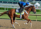 Frammento 'Developing Nicely' for Belmont