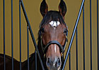Frankel Tops List of Cartier Finalists