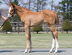 First Frankel Foal to be Offered in Japan