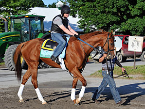 Freedom Child - Belmont Park, June 5, 2013.