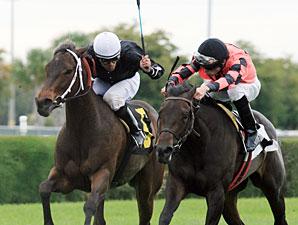 Frolic's Revenge wins the 2012 Calder Oaks.