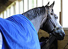 Frosted Works Bullet Toward Travers