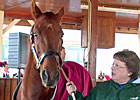 Funny Cide Heats Up Horse Park