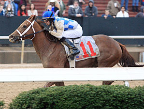 Gleaming in the American Beauty Stakes.