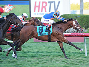 Palm Beach Winner Could Land on Derby Trail