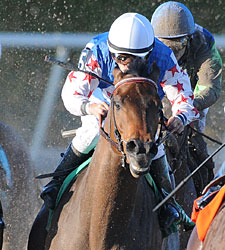 Baffert Looks For Fourth Lone Star Derby Win
