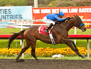 Game On Dude Delivers Gritty Native Diver Win