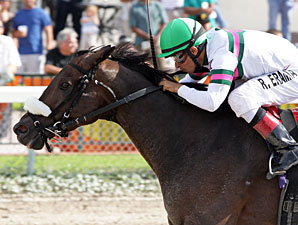 Gantry wins the 2012 Smile Sprint Handicap.