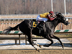 Gattopardo cruises to victory in the Miracle Wood.