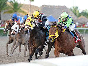 Wildcat Red Set to Run Next in Holy Bull
