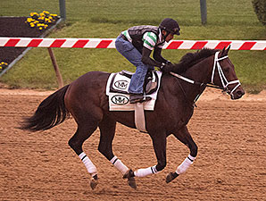 General a Rod - Pimlico, May 14, 2014.