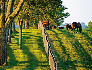 Ag Appropriations Bill Impacts Horse Industry