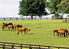Kentucky Equine Survey Releases Findings