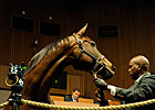 Keeneland November Sale Has 3,919 Lots