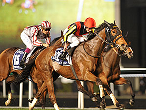 Gentildonna wins the 2014 Dubai Sheema Classic.