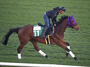 Gentildonna preps at Meydan March 24, for the Dubai World Cup card.