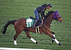 World Cup Hopefuls Stretch Legs at Meydan