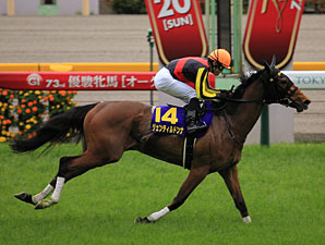 Gentildonna in the Yushun Himba Japanese Oaks.