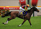 Gentildonna Romps in Tokyo&#39;s Japanese Oaks