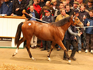 Only Known Foal of GW Sells For About $535K