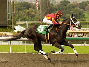 Georgie Boy wins the San Carlos.